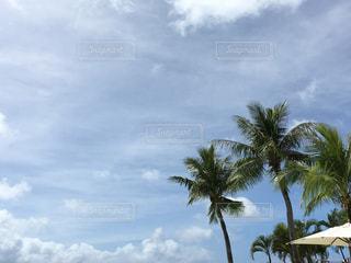 海の写真・画像素材[611575]