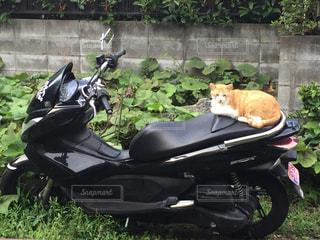 バイクの写真・画像素材[612497]