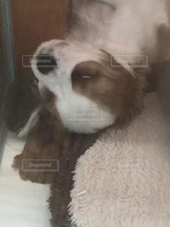 犬の写真・画像素材[612544]