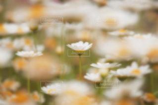 花の写真・画像素材[612601]