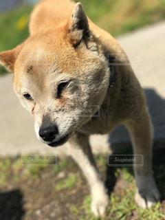 犬 - No.613547