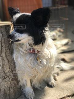 犬の写真・画像素材[613548]
