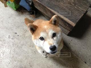 犬の写真・画像素材[636494]