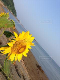 花の写真・画像素材[636496]