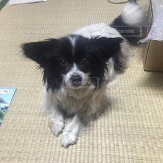 犬の写真・画像素材[639878]
