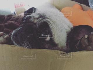 犬の写真・画像素材[613489]