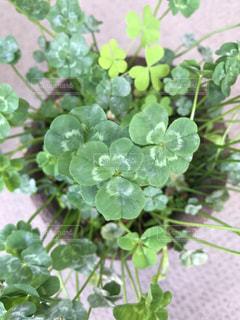 植物の写真・画像素材[613594]