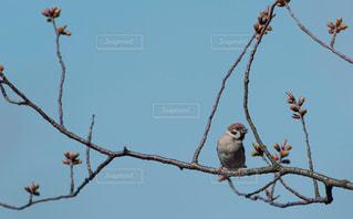 雀の休憩。の写真・画像素材[1095989]