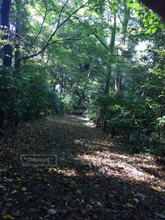 秋の散歩道の写真・画像素材[844901]