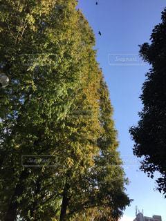 都会の秋空の写真・画像素材[901166]
