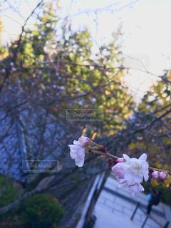 木の上のピンクの花で一杯の花瓶の写真・画像素材[953800]