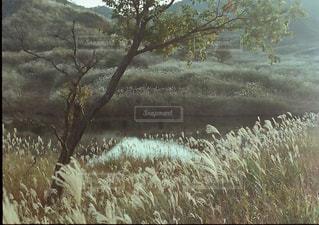 限られた時間の風景の写真・画像素材[1821524]