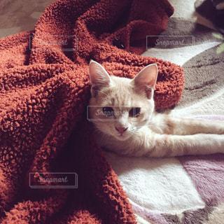 猫の写真・画像素材[613866]