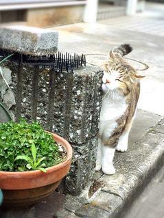 猫の写真・画像素材[613969]