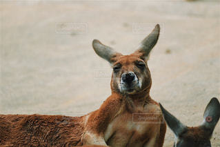 動物の写真・画像素材[613986]