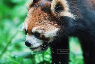 動物の写真・画像素材[614010]
