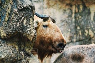 動物の写真・画像素材[614017]