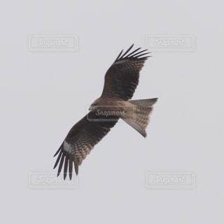 鳥の写真・画像素材[614216]