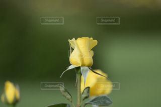 花の写真・画像素材[617163]