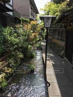 川の写真・画像素材[614498]