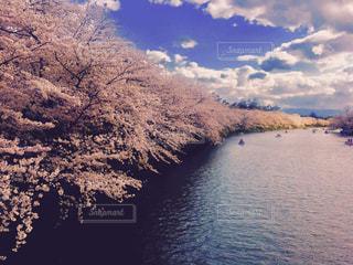 花の写真・画像素材[618451]