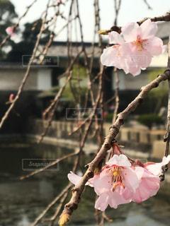 植物にピンクの花の写真・画像素材[824138]
