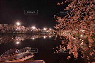 桜の写真・画像素材[824154]