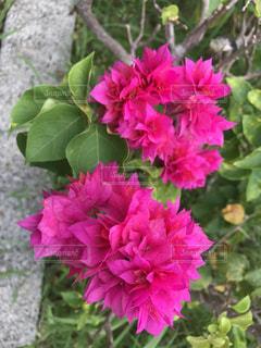 花の写真・画像素材[615076]