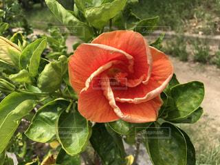 花の写真・画像素材[615202]