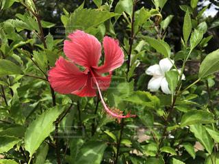 花の写真・画像素材[615222]