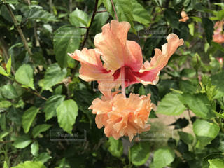 花の写真・画像素材[615225]