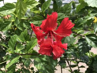 花の写真・画像素材[615226]