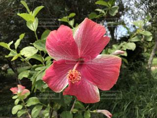 花の写真・画像素材[615381]
