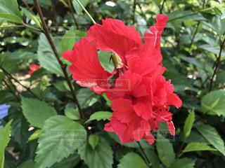 花の写真・画像素材[615429]