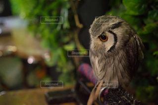 鳥の写真・画像素材[651527]