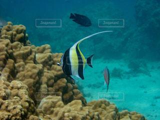 水の下を泳ぐ魚の写真・画像素材[2321474]