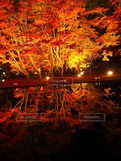 背景の夕日とツリー - No.875091