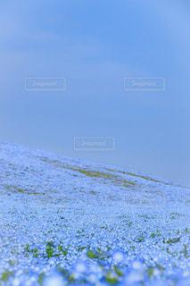 花の写真・画像素材[615177]