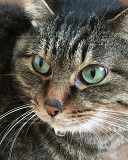 猫の写真・画像素材[615261]