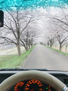 春の写真・画像素材[615633]