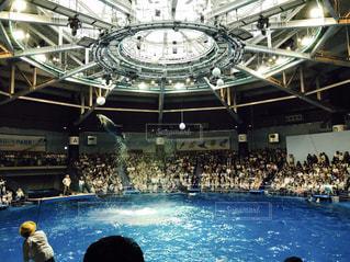 イルカの写真・画像素材[615844]