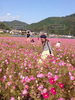 花の写真・画像素材[621215]