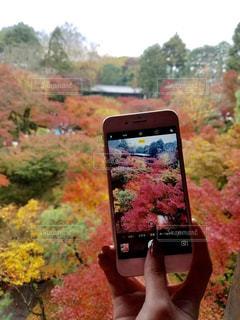 携帯電話を持つ手の写真・画像素材[1170510]