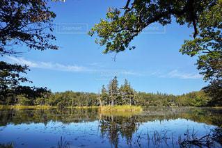 知床五湖の写真・画像素材[1510242]