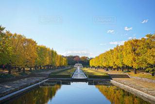 昭和記念公園の写真・画像素材[2793997]