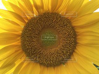 花の写真・画像素材[644487]