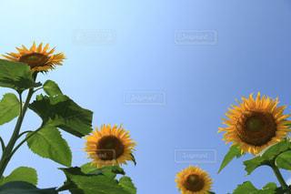 自然の写真・画像素材[616335]