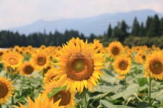 自然の写真・画像素材[616336]