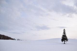雪に覆われた斜面の写真・画像素材[917541]