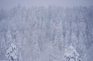 北海道の冬の写真・画像素材[4043515]